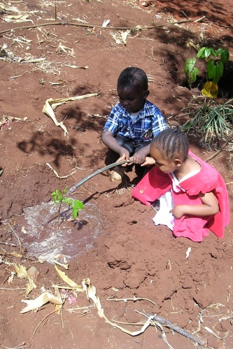A tree planted in Kenya in memory of Alice Mbugua